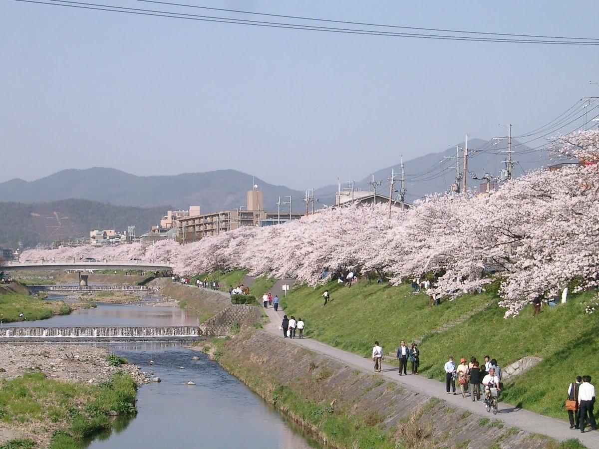 河合橋からの桜並木 2005年4月9日 撮影:MKタクシー