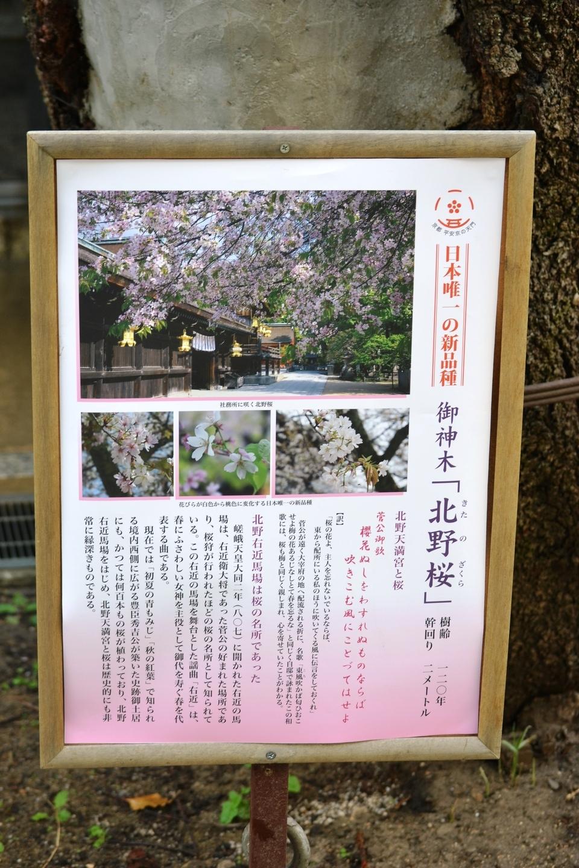 北野桜の案内板