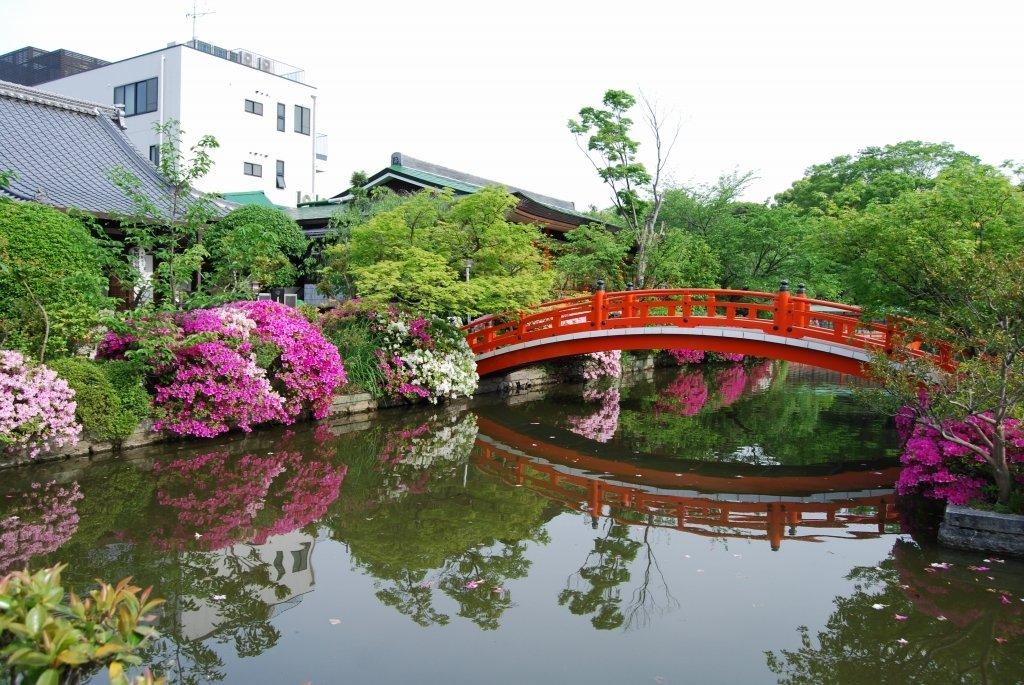 神泉苑 見頃 2008年5月7日 撮影:MKタクシー