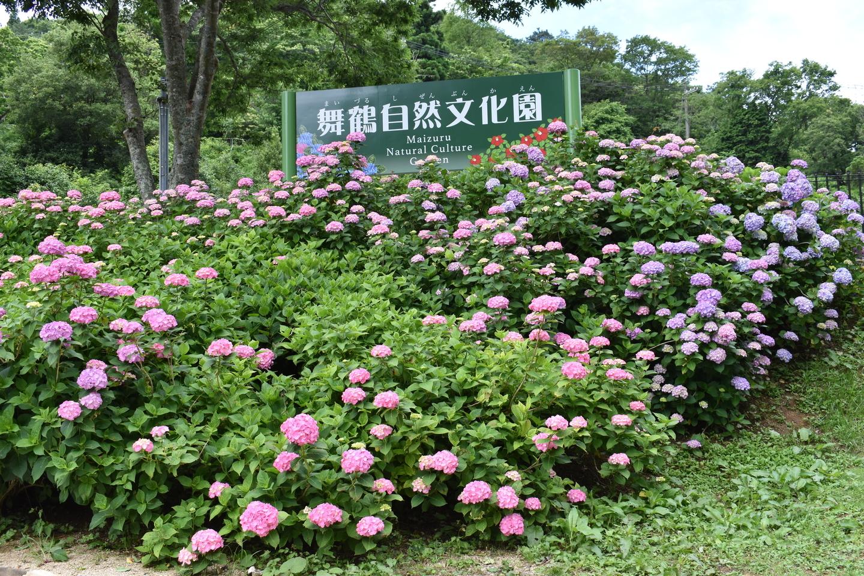 舞鶴自然文化園 2018年6月18日 撮影:MKタクシー