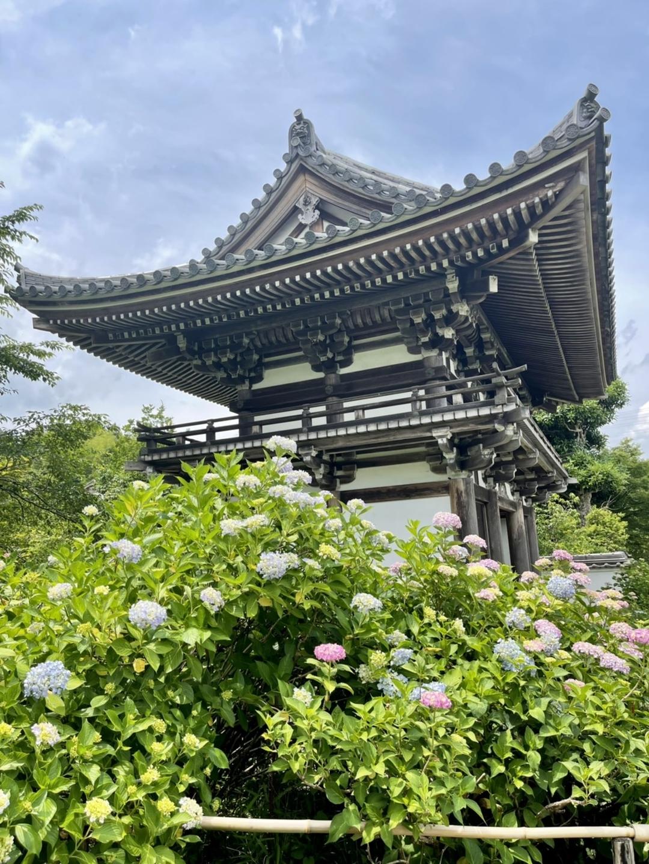仁王門 あじさい 七分咲き 2021年6月11日 撮影:MKタクシー
