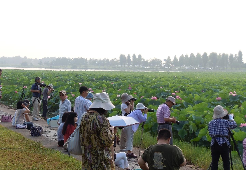烏丸半島の蓮大群落に集まる人々 2012年7月29日 撮影:MKタクシー
