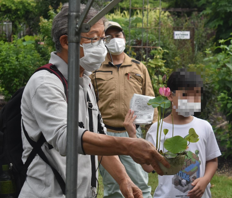 京都府立植物園の観蓮会 碗蓮 2021年7月10日 撮影:MKタクシー