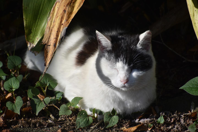 あまりの暑さに日陰で涼む猫 撮影:MKタクシー