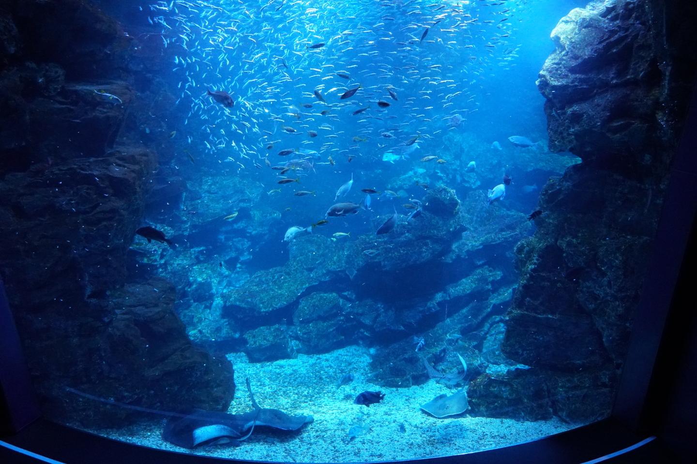 京都水族館 2020年8月26日 撮影:MKタクシー