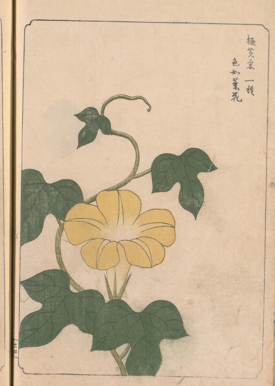 1817年刊行「あさかほ叢」国立国会図書館デジタルコレクションより