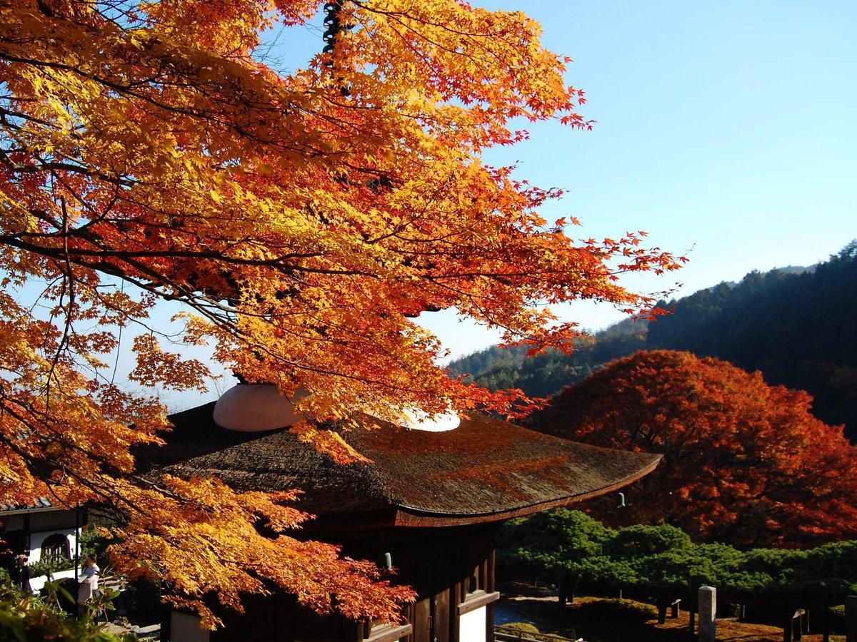 「京都の中心部を巡った後で、ゆっくり落ち着いた景色を楽しまれる方が多いです」(写真は善峯寺) MK新聞2016年11月1日号より