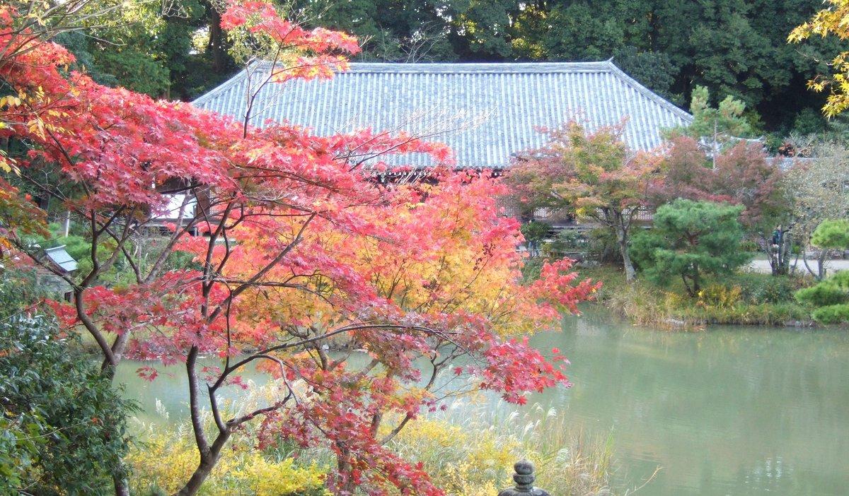 浄瑠璃寺 MK新聞2012年10月1日号より