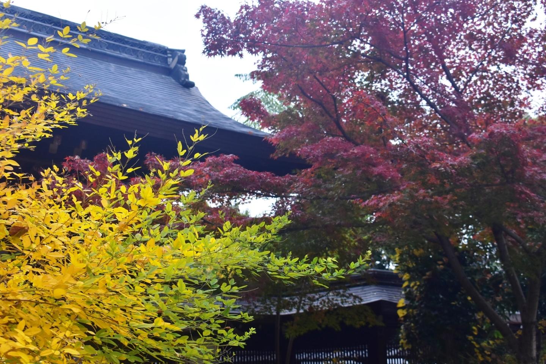 萩の黄葉 梨木神社 2019年11月24日 撮影:MKタクシー