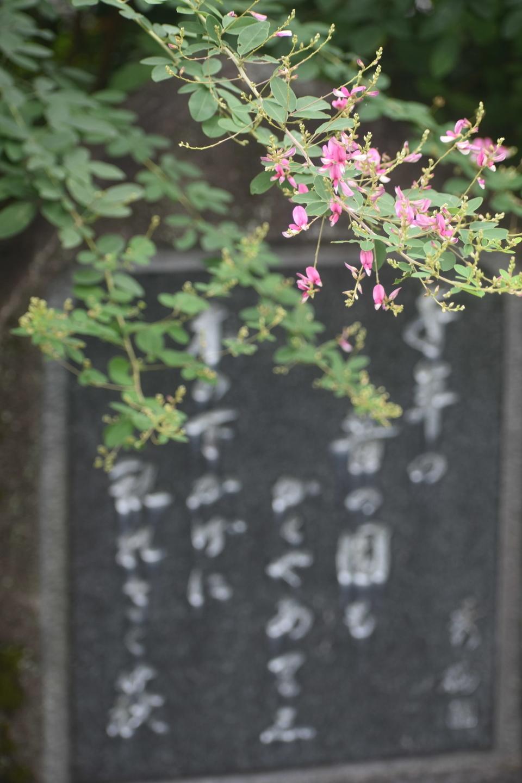 梨木神社の萩と湯川秀樹歌碑 五分咲き 2021年9月15日 撮影:MKタクシー