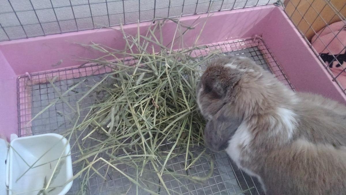 草を食ってる