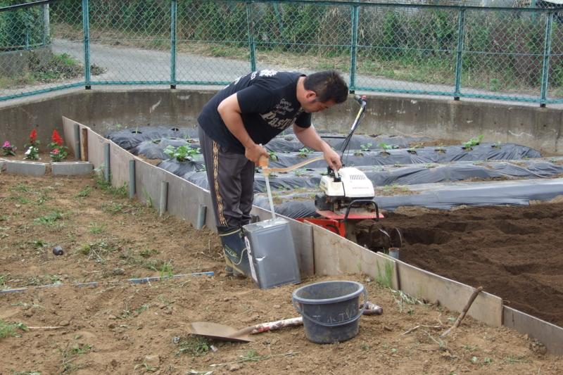 f:id:mm-farm:20100613152257j:image