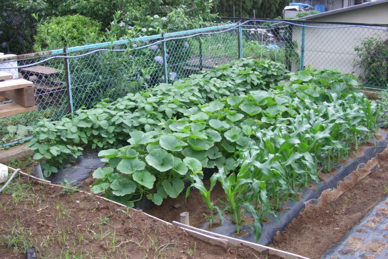 f:id:mm-farm:20100620062026j:image