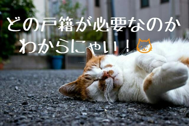 アイキャッチ画像(戸籍の請求に悩んでいる猫)