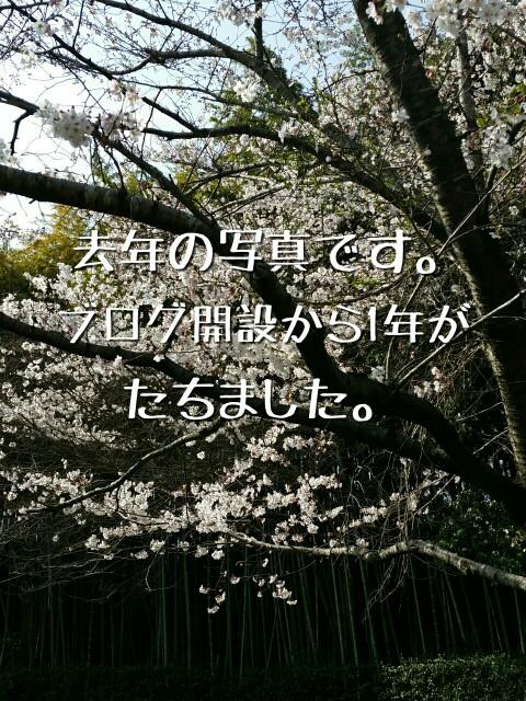 ブログを始めたころの桜の写真
