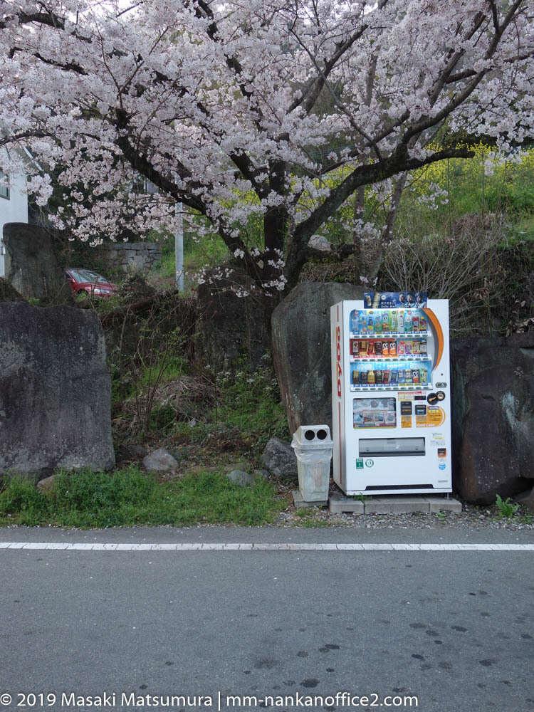 桜の木と自動販売機