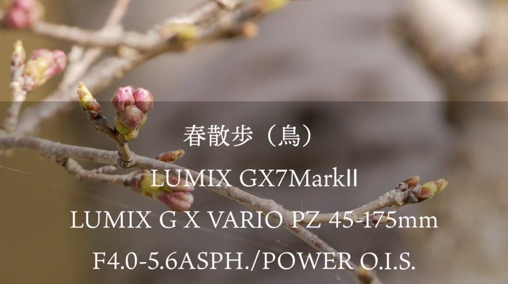 f:id:mm-nankanoffice:20200322120758j:image