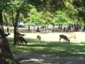 2015/05/08 奈良公園