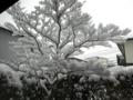 2017/01/15 広島市内 大雪