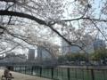 2018/03/26 京橋川河畔 桜四分咲き