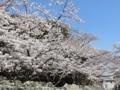 2018/03/28 比治山 桜満開