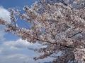 2019/04/02 江田島 真道山千本桜