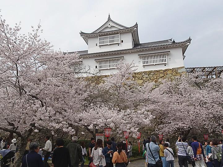 2019/04/07 津山城 さくらまつり
