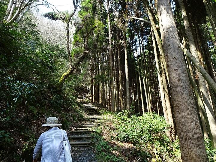 2019/04/08 醍醐桜 大勢の坂
