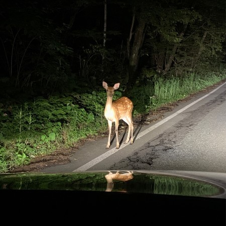 Late night on the national highway... Encountering a young deer.