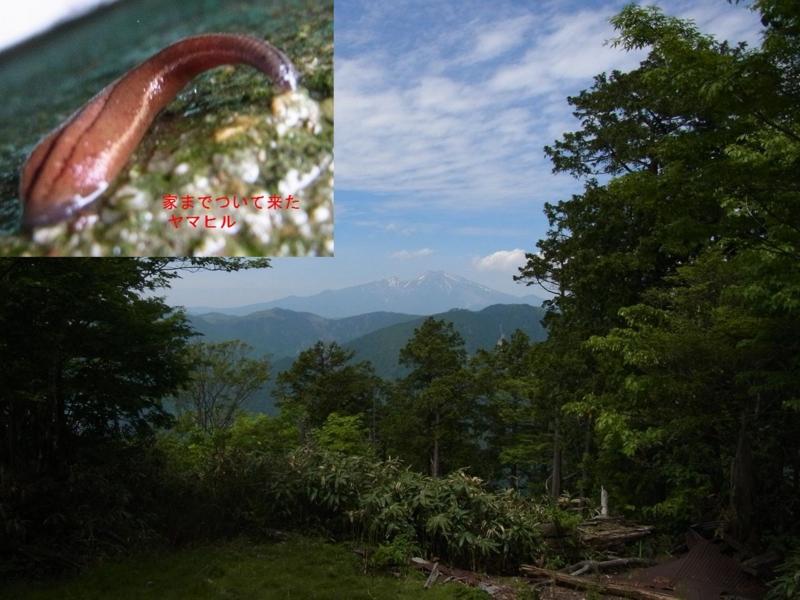 f:id:mnumeda:20120618124316j:image
