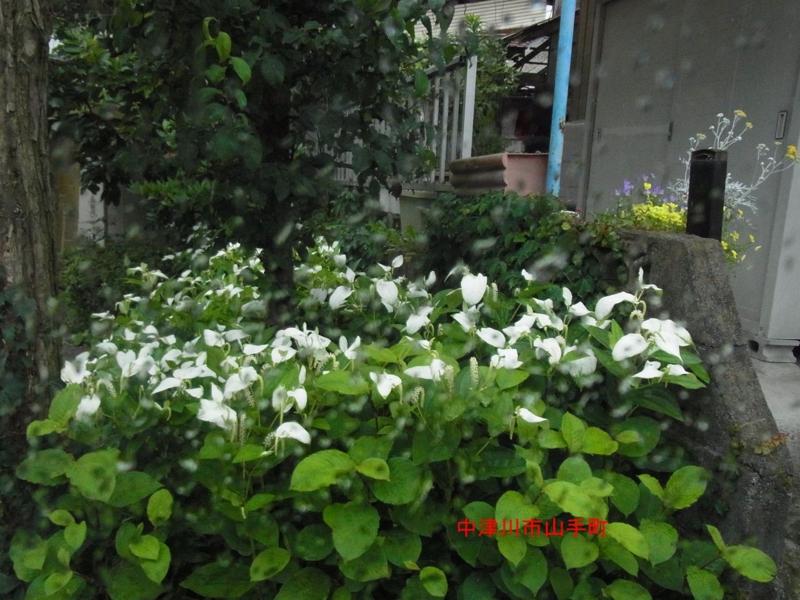 f:id:mnumeda:20120703194139j:image