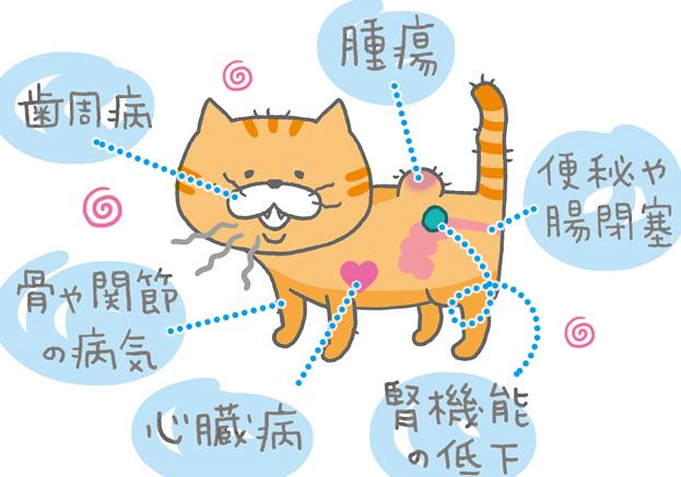 【獣医師監修】猫が食欲不振だけど水は飲む…考え …