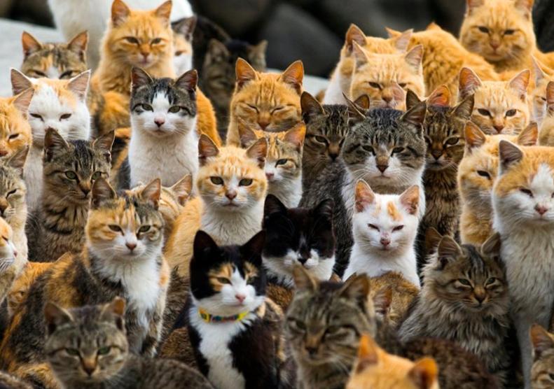 猫の種類♪人気猫の値段を調査してみた! , 保護猫モモ&ナナの