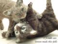 [猫][ねこ][ネコ][仔猫][子猫][ハンドメイド][じゃれ合う子ねこ]