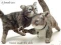 [猫][ねこ][ネコ][仔猫][子猫][ハンドメイド]じゃれ合う子ネコ