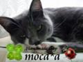 [ロゴ][てんとう虫][四葉のクローバー][バナー][猫][ネコ][ねこ]