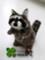 [アライグマ][ぬいぐるみ][ペット][販売][ブリーダー][プレゼント][20101004][雑貨]
