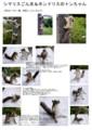 [ハンドメイド][手作り][羊毛フェルト][シマリス][本土リス][二ホンリス][子猫ギフト販売|子犬雑]