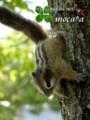 [リス][squirrel][りす][ペット][子供][ぬいぐるみ][可愛い画像][雑貨][羊毛フェルト][ハンドメイド]