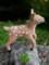 [小鹿のバンビ][こじか][小鹿][コジカ][可愛い画像][可愛いペット][羊毛フェルト][ハンドメイド][雑貨][20110530]