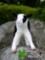 [子牛][ホルスタイン][牡牛子供][牝牛子供][あかちゃん][赤ちゃん][可愛い画像][可愛いペット][羊毛フェルト][ハンドメイド]