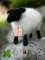[子羊][雌羊][子供][牡羊][あかちゃん][赤ちゃん][可愛い画像][可愛いペット][羊毛フェルト][ハンドメイド]