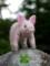 [子ぶた][子豚][コブタ][こぶた][あかちゃん][赤ちゃん][可愛い画像][可愛いペット][羊毛フェルト][ハンドメイド]