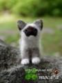 [ヒマラヤン][子猫][子ネコ][子ねこ][あかちゃん][赤ちゃん][可愛い画像][可愛いペット][羊毛フェルト][ハンドメイド]