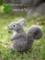 [子リス][子りす][リス][りす][あかちゃん][赤ちゃん][可愛い画像][可愛いペット][羊毛フェルト][ハンドメイド]