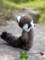 [アライグマ][あらいぐま][ペット][子供][ぬいぐるみ][可愛い画像][雑貨][羊毛フェルト][ハンドメイド][20110531]