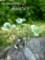 [クローバー][四葉のクローバー][インテリア][フェルト][ハンドメイド][小物][20110706]