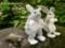 [うさぎと[うさぎのぬいぐるみ][ウサギぬいぐるみ][うさぎとかめ][ウサ