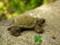 [亀][かめ][カメ][ミドリガメ][ペット][ぬいぐるみ][羊毛フェルト][ハンドメイド][雑貨][可愛い画像]