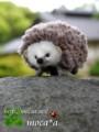 [ハリネズミ][はりねずみ][針ねずみ][ペット][ぬいぐるみ][羊毛フェルト][ハンドメイド][雑貨][可愛い画像][20110531]